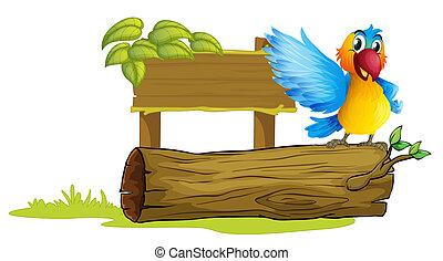 coloré, perroquet