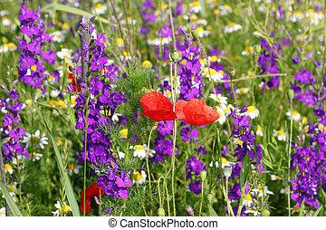 sauvage fleurs ressort sauvage printemps flowers photographies de stock rechercher. Black Bedroom Furniture Sets. Home Design Ideas