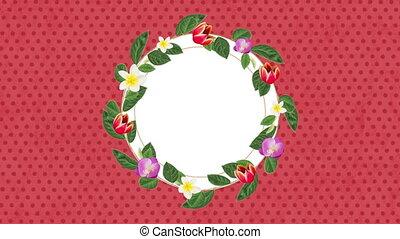 coloré, rond, arrière-plan animation, fleurs roses, vide, ...