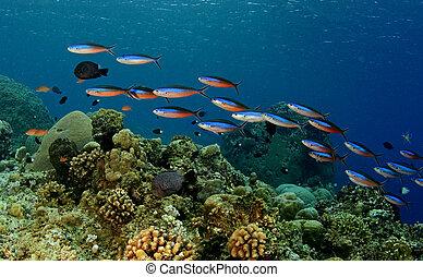 coloré, sous-marin