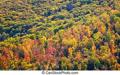 coloré, texture, arbres, forêt, fond, automne
