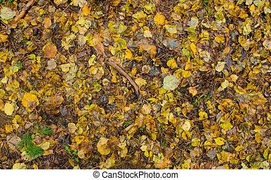 coloré, texture., feuilles, automne, automne, fond