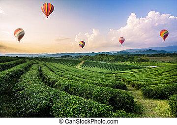 coloré, thé, sur, voler, air, plantation, chaud, coucher soleil, ballons, paysage