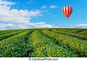 coloré, thé, sur, voler, plantation, coucher soleil, ballons, air chaud, paysage