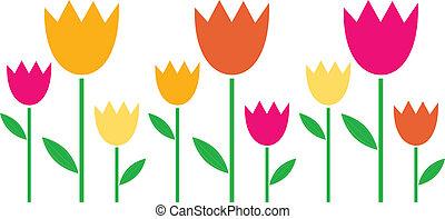 coloré, tulipes, isolé, printemps, blanc, rang