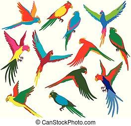 coloré, vecteur, ensemble, jungle, perroquet