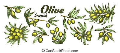 Color Assortment Different Olive Branch Set Ink Vector