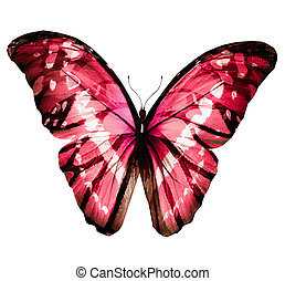 Color butterfly , isolated on white background