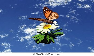 Color changing butterfly and a daisy