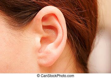 ear - color closeup picture of brunette girl ear