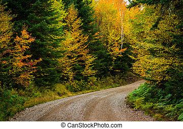 color del otoño, por, un, camino de tierra, en, montaña...