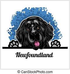 Color dog head, Newfoundland breed on white background