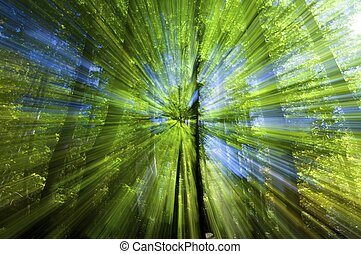 color explosion - abstraction created inside a forest,...
