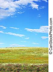 Color  field background.