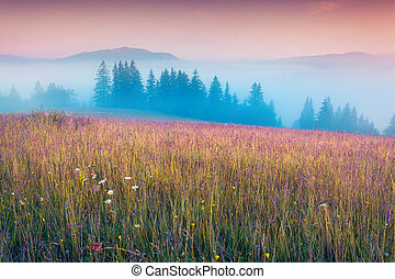 Color foggy morning on a meadow with fresh grass