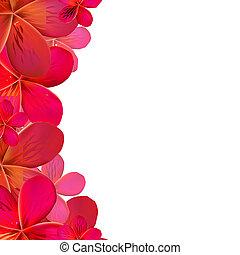 Color Frangipani Frame - Frangipani Frame With Water Drops,...