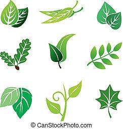 color, hojas, conjunto