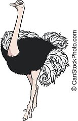 color, ilustración, ostrich.