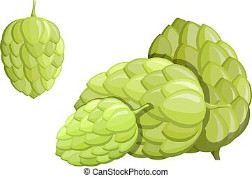 Color image of a green hop flower on a white background. An isolated object of nature, the material for beer and alcoholic beverages. Vector illustration