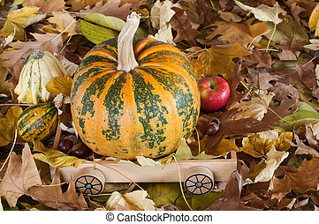 Color in autumn