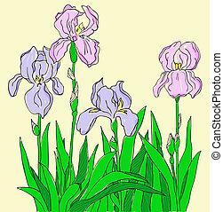 Color iris