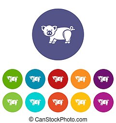 color, lindo, conjunto, cerdo, iconos