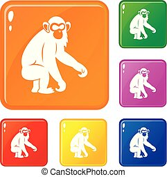 color, macaco, vector, conjunto, iconos