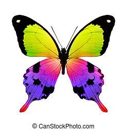 color, mariposa