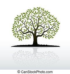 Color Oak Tree. Vector Illustration.