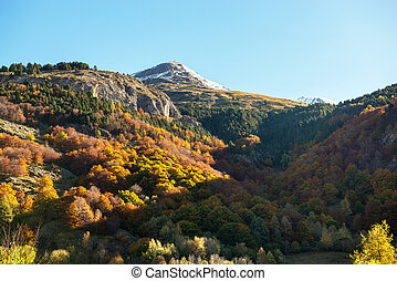 color of autumn at mountain (french Pyrenees)