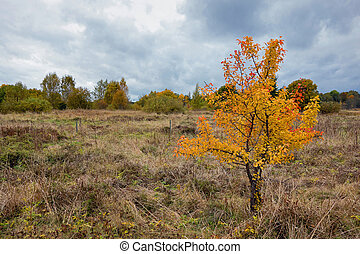 Color of fall in a field