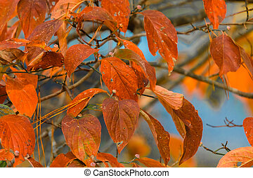 Color of Fall Leaves