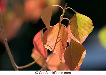Color of Leaves