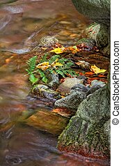 Color of stream in autumn