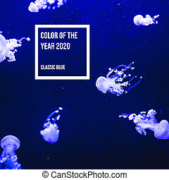 Color of the year 2020 classic blue water and neon jellyfish in the aquarium.