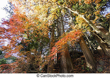 color of tree leaves in Japan change in autumn season