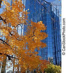 color, otoño