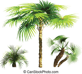 color Palms - vector - color Palms made in vector