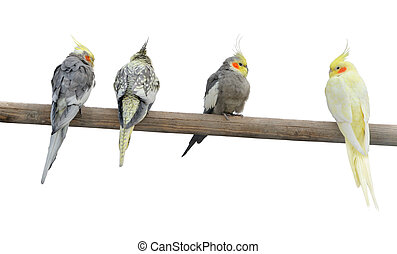 Color parrots on a pole. It is isolated on a white ...