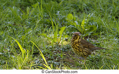 bird with grass in the background