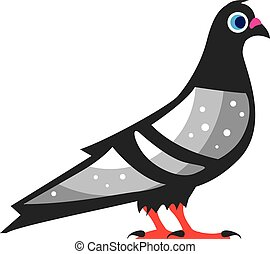 Color Pigeon Dove