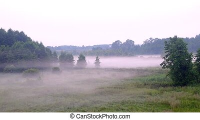 Color pink mist slowly spread along the ground in a forest -...