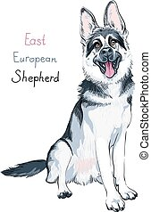 Color sketch dog East European shepherd breed