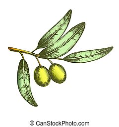 Color Symbol Of Peace Olive Branch Hand Drawn Vector