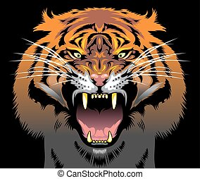 color tiger head as very nice animal background