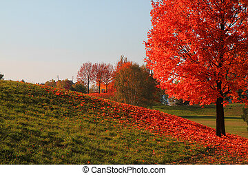 color tree in autumn