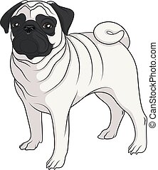 Color vector image of a pug.