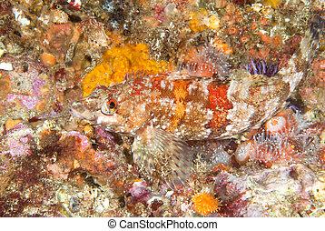 color, vibrante, pez, arrecife
