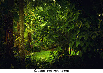 jungle - color  view of nice color misty  tropical jungle