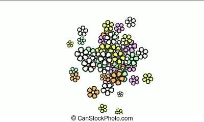 color wild daisy flower,spring